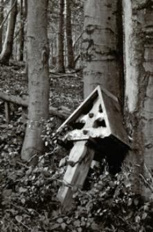 Przytulił nas las [Dokument ikonograficzny]
