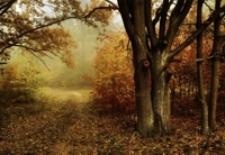 Jesień w lesie [Dokument ikonograficzny]
