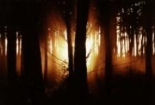 Płonący krzew [Dokument ikonograficzny]