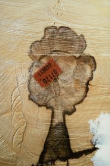 Drzewo w drewnie [Dokument ikonograficzny]