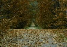 Jesienny spacer [Dokument ikonograficzny]